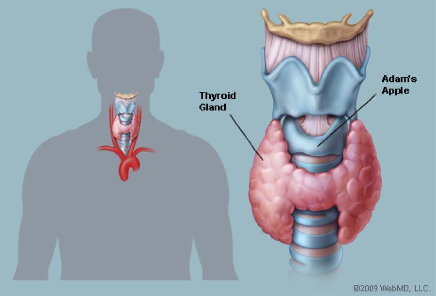 Let\'s Talk Thyroid Health! | Grandmas with Muscles